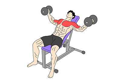 コツ ダンベル フライ 【女性向け】ダンベルフライのやり方!大胸筋へ効かせるコツや重さを解説
